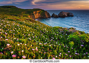 Flowers on a bluff above Rodeo Beach at sunset, at Golden...