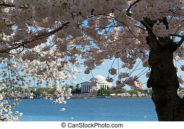 Thomas Jefferson Memorial surrounded by flowers - In...