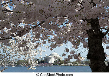 Flower arround Thomas Jefferson Memorial surrounded by...