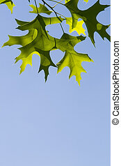 green leaf in clear blue sky - green leaves hanging on...