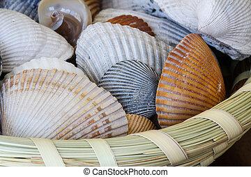 Shells in Sweatgrass Basket - Sea shells in a wicker basket...