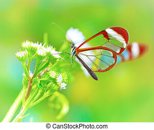 Beautiful butterfly on flower - Beautiful butterfly sitting...