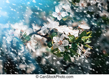 Spring flowers in a rainy day - Spring Soft image of...