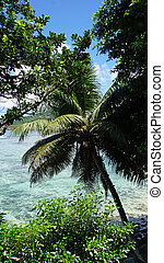 tropical coast - wild green tropical coast of mahe island