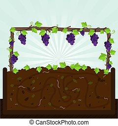 Grapevine and compost - Grapevine Bunch of grapes and...