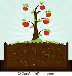 Tomato tree and compost - Tomato tree Composting process...