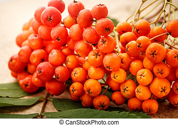 Red ashberry bunch with green leaves on white