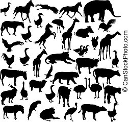 Set silhouettes animals and birds in the zoo collection...