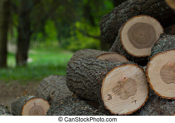 cut wood logs stacked in a pile - Background of cut wood...