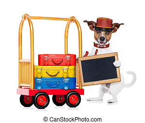 bellboy dog - jack russell dog pushing a hotel Luggage Cart...