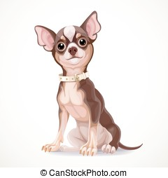 Cute little chihuahua dog wearing a collar vector...