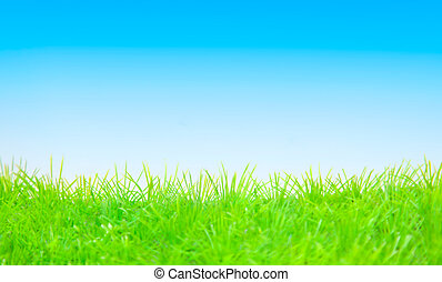 background - springtime background green blue copyspace