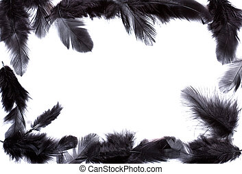 frame of black feather - exotic soft beautiful black feather...