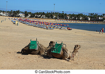 Fuerteventura Canary Islands Spain Vacation travel resort