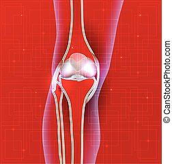 Normal knee joint abstract red background, leg silhouette
