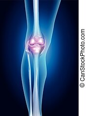 Healthy human leg - Human leg, knee anatomy, bright blue...