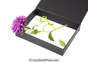Open gift box with flower isolated on a white background
