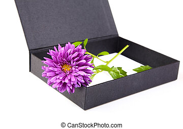 Still-life with an aster and  box on a white