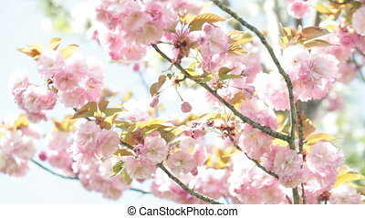 tree branch with pink flowers swaying i
