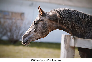 Portrait of a sports thoroughbred stallion behind a...