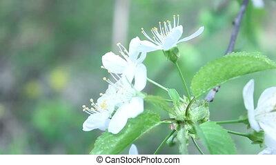 summer tree white flower