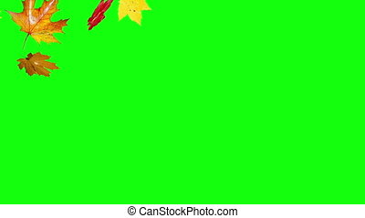 falling leaves left green screen