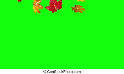falling leaves autumn green screen