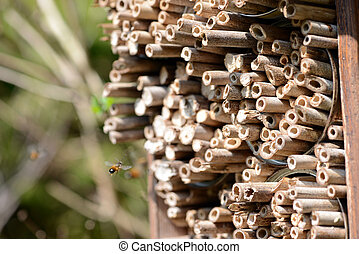 male wild bees flying in front of insect shelter. - male...