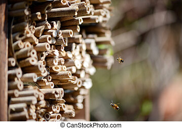 male wild bees flying in front of insect shelter.