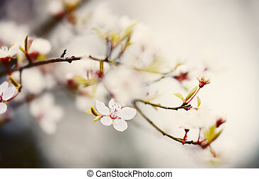 plum blossom in soft pastel colors springtime cross...