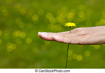 Woman holding yellow springtime flower in hand