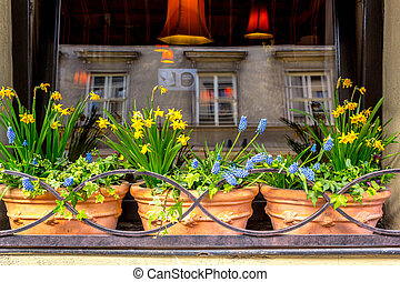 Spring flowers in the cafe window - Spring flowers,...