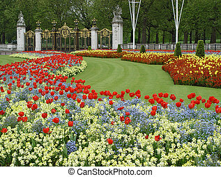 Flowers near Buckingham palace - Claret, red, blue and...