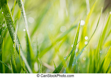 green background, detail of grass - grass with drops of...