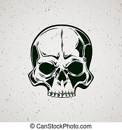 Skull grunge Graphic painted skull on a grey background