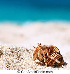 Hermit crab at beach - Hermit crab on beach at Seychelles