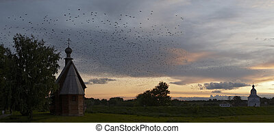 Birds flock at sunset - Skyscape panorama with birds flock,...