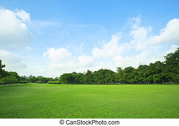 beautiful green grass field and fresh plant in vibrant...