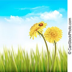 Two yellow dandelions with a ladybug on a nature spring background. Vector.