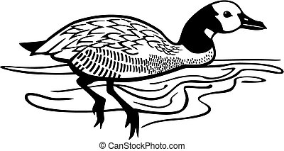 White Faced Whistling Duck - vector illustration of a...