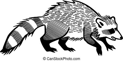 Raccoon - vector illustration of a raccoon