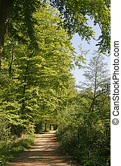 Footpath in spring, Lower Saxony, Germany - Footpath in...