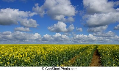 Rape field and Clouds 3 - Panoramic time-lapse of rape field...