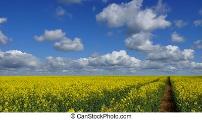 Rape field and Clouds #2 - Panoramic time-lapse of rape...
