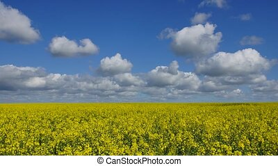 Rape field and Clouds #1 - Panoramic time-lapse of rape...
