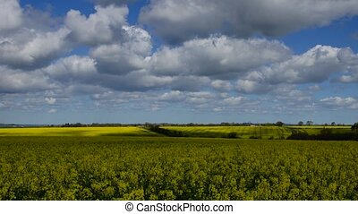 Rape field and Clouds 4 - Panoramic time-lapse of rape field...