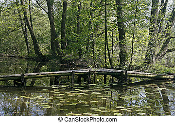 Pond with water reflection and bridge - Pond with water...