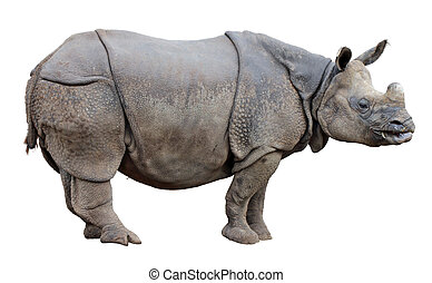 Rhino - Side view of one-horned Rhinoceros isolated on a...