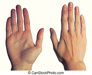 Womens hands, palm and back - Female hand palm with lines...