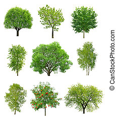 Great collection of deciduous trees isolated on white...